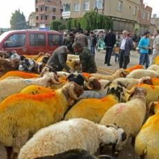 أضحية العيد بالحنة.. فقط في تركيا مذاق خاص