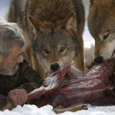 الرجل الذئب