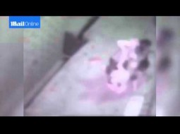 بالفيديو… والدة تحمي طفلتها من هجوم كلب شرس