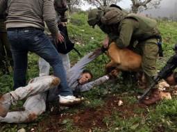 اعتداءات الاحتلال الاسرائيلي