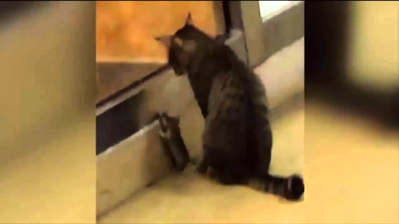 بالفيديو.. فأر وقطة يتآمران لسرقة مطعم!