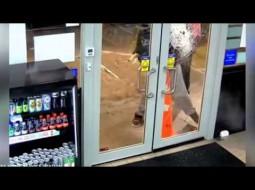 بالفيديو… سلاح جديد لطرد اللصوص من المحال التجارية!