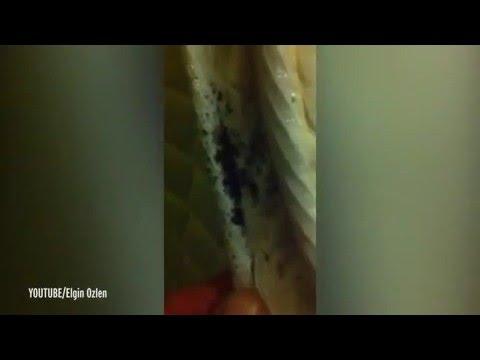 بالفيديو… نزيل بفندق يكتشف مستعمرة حشرات في سريره!