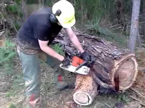 فيديو.. تعرف على شجرة الدم في جنوب أفريقيا