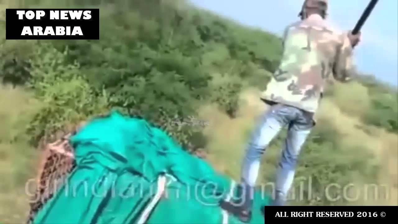 بالفيديو… أسد يهاجم مجموعة عمال في أدغال أفريقيا