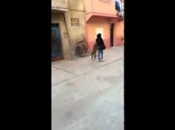 بالفيديو.. شاب يحرض كلب على اختطاف حقيبة فتاة