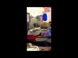 """""""بالفيديو"""": أمر ملكي بإقالة رئيس شركة الطيران المغربية.. والسبب كلب!"""