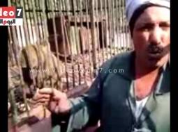 فيديو يروي حكاية قرد في مصر حاول الانتحار بسبب كبته الجنسي بعد أن امتنعت عنه زوجته