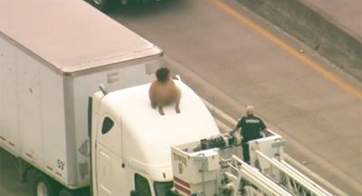 سيدة عارية على ظهر شاحنة